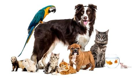 ANIMAL REIKI: Animal Reiki Energy Healing Certification!
