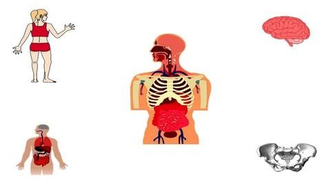 Crash Course on Human Body