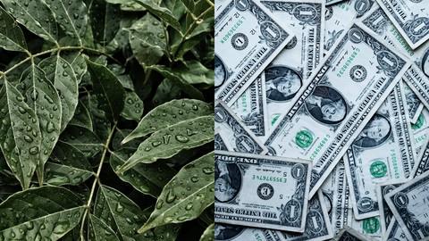 Beginner Course on Sustainable Finance