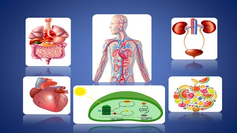 Biology - Nutrition, Respiration, Circulatory, Excretion