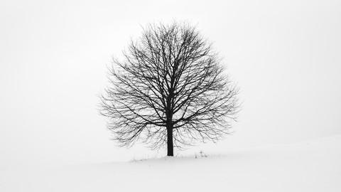 Binary Trees - Crash Course