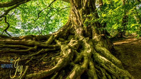 Authentic Joy Spiritual Growth Foundation Course