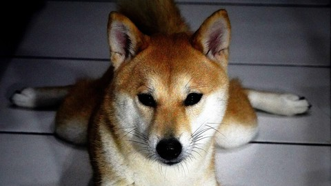 What is Dogecoin and How to Mine It