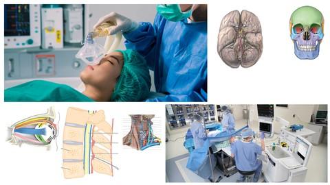 Anesthesia - Human Anatomy for Anesthesia - By APC
