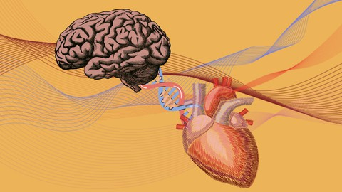 Emotional Intelligence: An Intermediate Guide