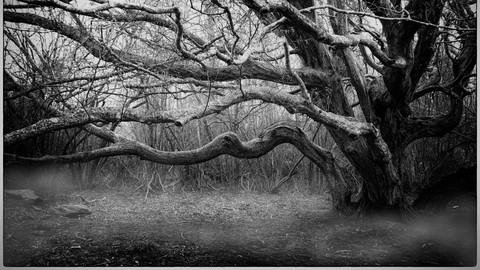 Create Stunning Black & White Images with Nik Silver Efex
