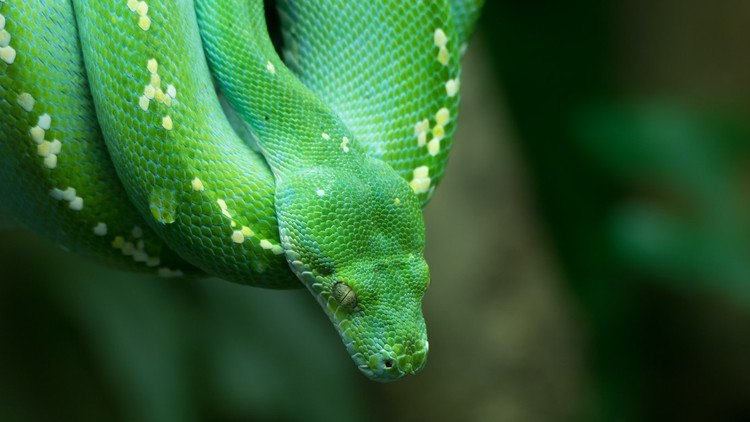 Python for Absolute Beginners – 2020 – (1.Part )