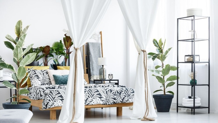 Decorating with Plants for Beginners.